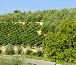 Italytour2